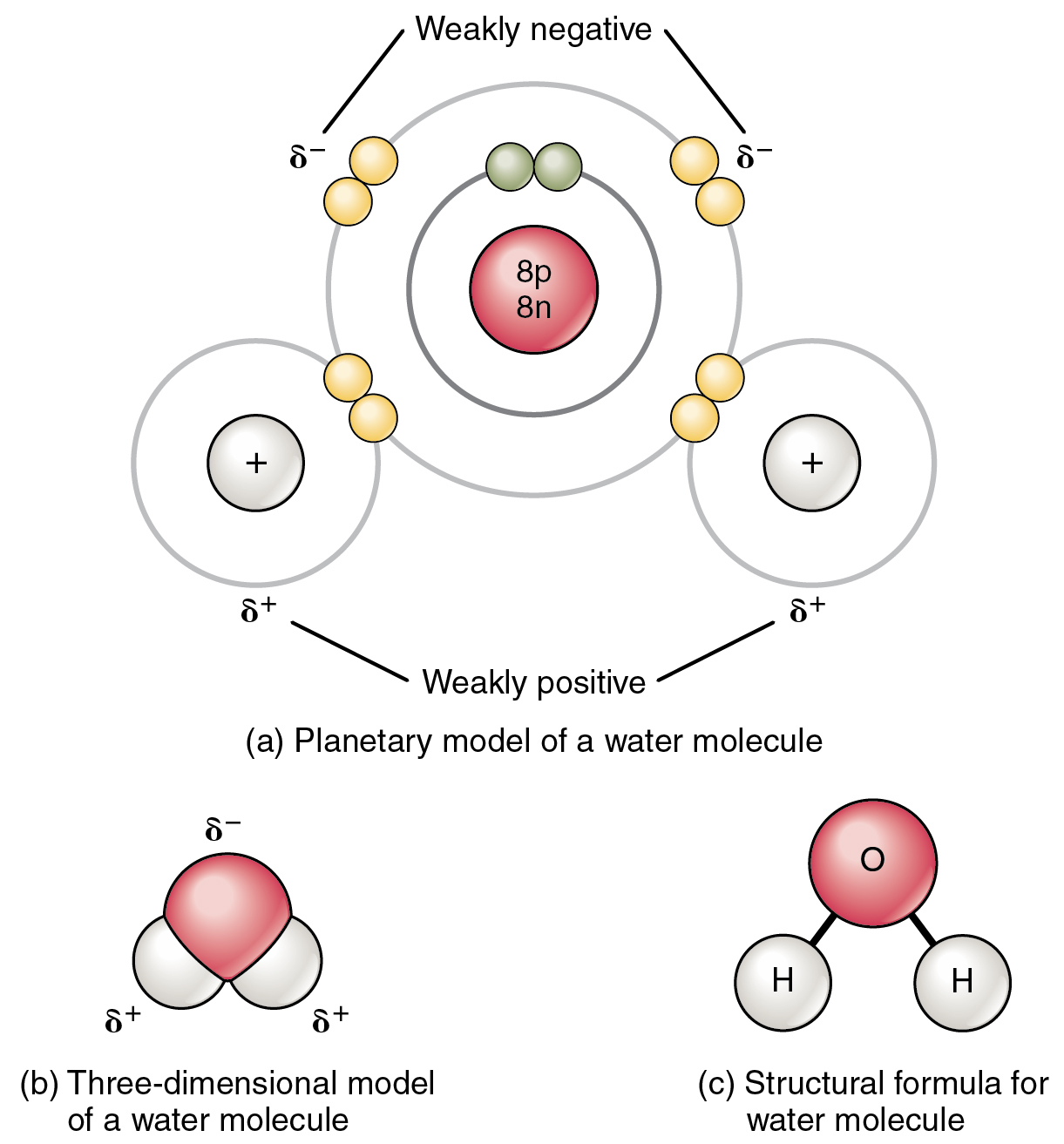 This figure shows the structure of a water molecule. The top panel shows two oxygen atoms and one hydrogen atom with electrons in orbit and the shared electrons. The middle panel shows a three-dimensional model of a water molecule and the bottom panel shows the structural formula for water.