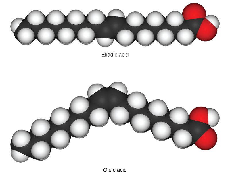 Oleic acid and eliadic acid both consist of a long carbon chain. In oleic acid the chain is kinked due to the presence of a double bond about half way down, while in eliadic acid the chain is straight.