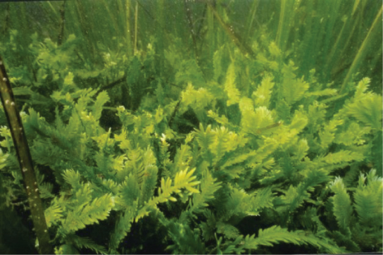 This underwater photo shows fern-like plants growing on the sea bottom.