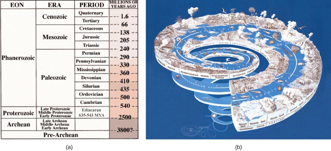 Table A describes eras in earth's history. The earth's history is divided into four eons, the Pre-Archean, Archaea, Proteozoic, Phanerozoic. The oldest eon, the Pre-Archean, spans the beginning of earth's history to about 3.8 billion years ago. The Archean eon spans 2.5 to 3.8 billion years ago, and the Proterozoic spans 570 million to 2.5 billion years ago. The Pharenozoic eon, from 570 million years ago to present time, is sub-divided into the Paleozoic, Mesozoic and Cenozoic eras. The Paleozoic era, from 240 to 570 million years ago, is further divided into seven periods: the Cambrian from 500 to 570 million years ago, the Ordovician from 435 to 500 million years ago, the Silurian from 410 to 435 million years ago, the Devonian from 360 to 410 million years ago, the Missisippian from 330 to 360 million years ago, the Pennsylvanian from 290 to 330 million years ago, and the Permian from 240 to 290 million years ago. The Mesozoic era, from 66 to 240 million years ago, is divided into three periods, the Triassic from 205 to 240 million years ago, the Jurassic from 138 to 205 million years ago, and the Cretaceous, from 66 to 138 million years ago. The Cenozoic era, from 66 million years ago to modern times, is divided into two eras, the Tertiary and the Quaternary. The tertiary period spans 66 to 1.6 million years ago. The quaternary period spans 1.6 million years ago to modern times. Illustration B shows geological periods in a spiral starting with the beginning of earth's history  at the bottom and ending with modern times at the top. The diversity and complexity of life increases toward the top of the spiral.