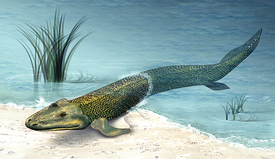 The image shows a tetrapod-like fish with fin-like legs.