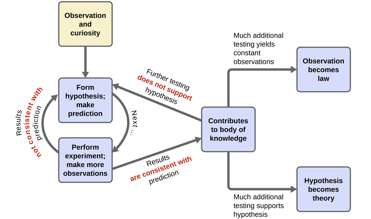 In this flowchart, the observation and curiosity box has an arrow pointing to a box labeled form hypothesis; make prediction. A curved arrow labeled next connects this box to a box labeled perform experiment; make more observations. Another arrow points back to the box that says form hypothesis; make prediction. This arrow is labeled results not consistent with prediction. Another arrow, labeled results are consistent with prediction points from the perform experiment box to a box labeled contributes to body of knowledge. However, an arrow also points from contributes to body of knowledge back to the form hypothesis; make prediction box. This arrow is labeled further testing does not support hypothesis. There are also two other arrows leading out from contributes to body of knowledge. One arrow is labeled much additional testing yields constant observations. This leads to the observation becomes law box. The other arrow is labeled much additional testing supports hypothesis. This arrow leads to the hypothesis becomes theory box.