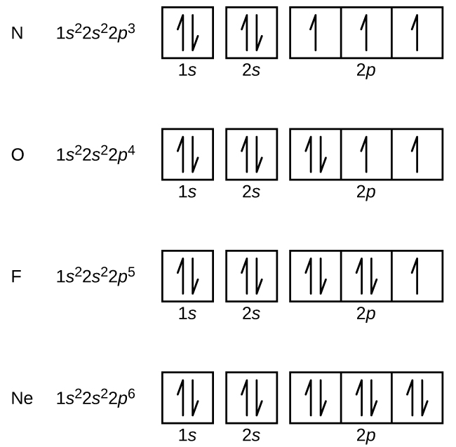 "This figure includes electron configurations and orbital diagrams for four elements, N, O, F, and N e. Each diagram consists of two individual squares followed by 3 connected squares in a single row. The first square is labeled below as, ""1 s."" The second is similarly labeled, ""2 s."" The connected squares are labeled below as, ""2 p."" All squares not connected to each other contain a pair of half arrows: one pointing up and the other down. For the element N, the electron configuration is 1 s superscript 2 2 s superscript 2 2 p superscript 3. Each of the squares in the group of 3 contains a single upward pointing arrow for this element. For the element O, the electron configuration is 1 s superscript 2 2 s superscript 2 2 p superscript 4. The first square in the group of 3 contains a pair of arrows and the last two squares contain single upward pointing arrows. For the element F, the electron configuration is 1 s superscript 2 2 s superscript 2 2 p superscript 5. The first two squares in the group of 3 each contain a pair of arrows and the last square contains a single upward pointing arrow. For the element N e, the electron configuration is 1 s superscript 2 2 s superscript 2 2 p superscript 6. The squares in the group of 3 each contains a pair of arrows."