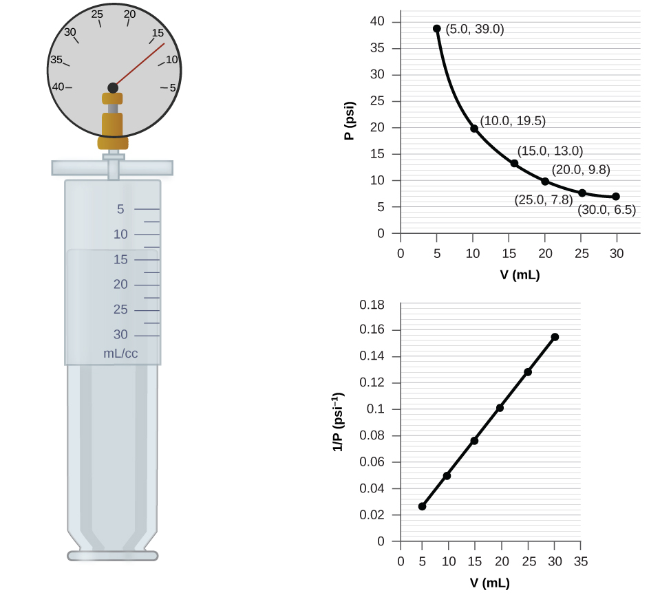 "This figure contains a diagram and two graphs. The diagram shows a syringe labeled with a scale in m l or c c with multiples of 5 labeled beginning at 5 and ending at 30. The markings halfway between these measurements are also provided. Attached at the top of the syringe is a pressure gauge with a scale marked by fives from 40 on the left to 5 on the right. The gauge needle rests between 10 and 15, slightly closer to 15. The syringe plunger position indicates a volume measurement about halfway between 10 and 15 m l or c c. The first graph is labeled ""V ( m L )"" on the horizontal axis and ""P ( p s i )"" on the vertical axis. Points are labeled at 5, 10, 15, 20, and 25 m L with corresponding values of 39.0, 19.5, 13.0, 9.8, and 6.5 p s i. The points are connected with a smooth curve that is declining at a decreasing rate of change. The second graph is labeled ""V ( m L )"" on the horizontal axis and ""1 divided by P ( p s i )"" on the vertical axis. The horizontal axis is labeled at multiples of 5, beginning at zero and extending up to 35 m L. The vertical axis is labeled by multiples of 0.02, beginning at 0 and extending up to 0.18. Six points indicated by black dots on this graph are connected with a black line segment showing a positive linear trend."