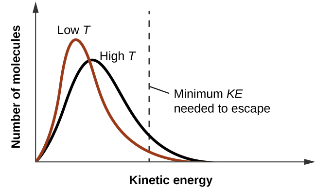 "A graph is shown where the y-axis is labeled ""Number of molecules"" and the x-axis is labeled ""Kinetic Energy."" Two lines are graphed and a vertical dotted line, labeled ""Minimum K E needed to escape,"" is drawn halfway across the x-axis. The first line move sharply upward and has a high peak near the left side of the x-axis. It drops just as steeply and ends about 60 percent of the way across the x-axis. This line is labeled ""Low T."" A second line, labeled ""High T,"" begins at the same point as the first, but does not go to such a high point, is wider, and ends slightly further to the right on the x-axis."