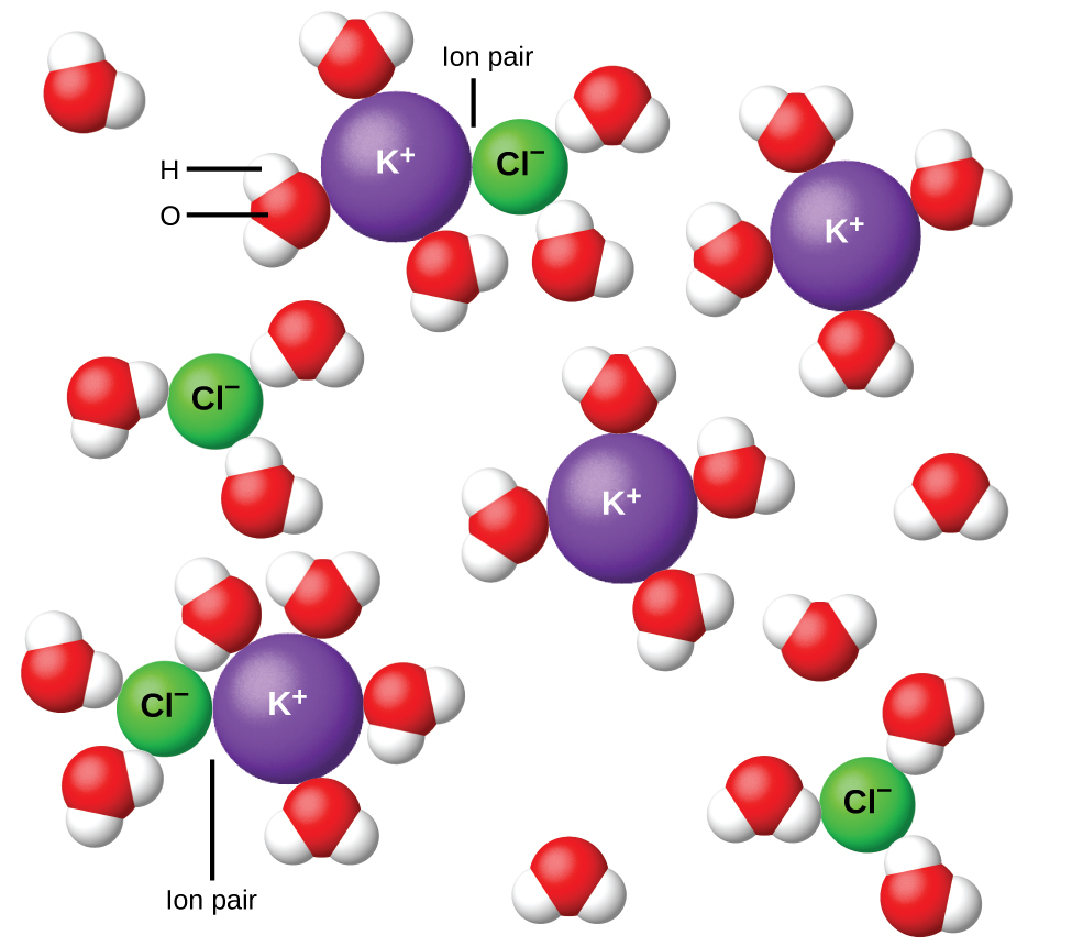 The diagram shows four purple spheres labeled K superscript plus and four green spheres labeled C l superscript minus dispersed in H subscript 2 O as shown by clusters of single red spheres with two white spheres attached. Red spheres represent oxygen and white represent hydrogen. In two locations, the purple and green spheres are touching. In these two locations, the diagram is labeled ion pair. All red and green spheres are surrounded by the white and red H subscript 2 O clusters. The white spheres are attracted to the purple spheres and the red spheres are attracted to the green spheres.