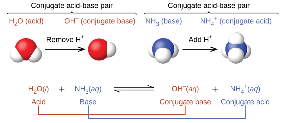 "This figure has three parts in two rows. In the first row, two diagrams of acid-base pairs are shown. On the left, a space filling model of H subscript 2 O is shown with a red O atom at the center and two smaller white H atoms attached in a bent shape. Above this model is the label ""H subscript 2 O (acid)"" in purple. An arrow points right, which is labeled ""Remove H superscript plus."" To the right is another space filling model with a single red O atom to which a single smaller white H atom is attached. The label in purple above this model reads, ""O H superscript negative (conjugate base)."" Above both of these red and white models is an upward pointing bracket that is labeled ""Conjugate acid-base pair."" To the right is a space filling model with a central blue N atom to which three smaller white H atoms are attached in a triangular pyramid arrangement. A label in green above reads ""N H subscript 3 (base)."" An arrow labeled ""Add H superscript plus"" points right. To the right of the arrow is another space filling model with a blue central N atom and four smaller white H atoms in a tetrahedral arrangement. The green label above reads ""N H subscript 3 superscript plus (conjugate acid)."" Above both of these blue and white models is an upward pointing bracket that is labeled ""Conjugate acid-base pair."" The second row of the figure shows the chemical reaction, H subscript 2 O ( l ) is shown in purple, and is labeled below in purple as ""acid,"" plus N H subscript 3 (a q) in green, labeled below in green as ""base,"" followed by a double sided arrow arrow and O H superscript negative (a q) in purple, labeled in purple as ""conjugate base,"" plus N H subscript 4 superscript plus (a q)"" in green, which is labeled in green as ""conjugate acid."" The acid on the left side of the equation is connected to the conjugate base on the right with a purple line. Similarly, the base on the left is connected to the conjugate acid on the right side."