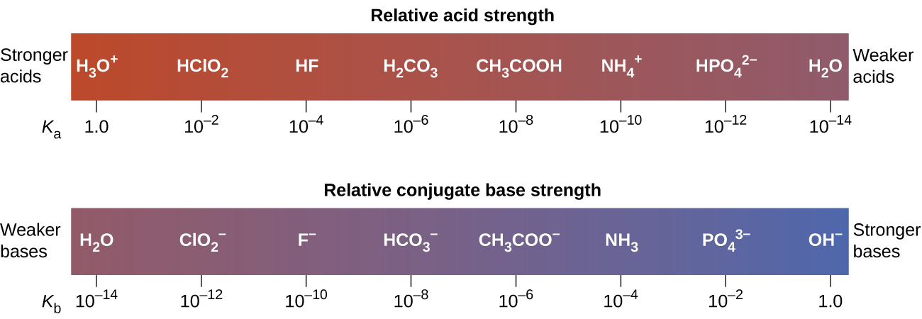 "The diagram shows two horizontal bars. The first, labeled, ""Relative acid strength,"" at the top is red on the left and gradually changes to purple on the right. The red end at the left is labeled, ""Stronger acids."" The purple end at the right is labeled, ""Weaker acids."" Just outside the bar to the lower left is the label, ""K subscript a."" The bar is marked off in increments with a specific acid listed above each increment. The first mark is at 1.0 with H subscript 3 O superscript positive sign. The second is ten raised to the negative two with H C l O subscript 2. The third is ten raised to the negative 4 with H F. The fourth is ten raised to the negative 6 with H subscript 2 C O subscript 3. The fifth is ten raised to a negative 8 with C H subscript 3 C O O H. The sixth is ten raised to the negative ten with N H subscript 4 superscript positive sign. The seventh is ten raised to a negative 12 with H P O subscript 4 superscript 2 negative sign. The eighth is ten raised to the negative 14 with H subscript 2 O. Similarly the second bar, which is labeled ""Relative conjugate base strength,"" is purple at the left end and gradually becomes blue at the right end. Outside the bar to the left is the label, ""Weaker bases."" Outside the bar to the right is the label, ""Stronger bases."" Below and to the left of the bar is the label, ""K subscript b."" The bar is similarly marked at increments with bases listed above each increment. The first is at ten raised to the negative 14 with H subscript 2 O above it. The second is ten raised to the negative 12 C l O subscript 2 superscript negative sign. The third is ten raised to the negative ten with F superscript negative sign. The fourth is ten raised to a negative eight with H C O subscript 3 superscript negative sign. The fifth is ten raised to the negative 6 with C H subscript 3 C O O superscript negative sign. The sixth is ten raised to the negative 4 with N H subscript 3. The seventh is ten raised to the negative 2 with P O subscript 4 superscript three negative sign. The eighth is 1.0 with O H superscript negative sign."