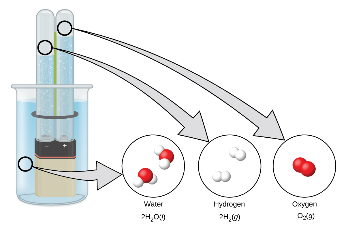 "A diagram shows a beaker that contains a liquid, a battery submerged in the liquid, and two test tubes. The battery has the positive and negative terminals labeled. The liquid is connected by a right-facing arrow to an image of two molecules made up of one red atom and two white atoms. It is labeled, ""Water,"" and, ""2 H subscript 2 O ( l )."" The left test tube above the negative sign is connected by a right-facing arrow to an image of two pairs of white atoms. The image is labeled, ""Hydrogen,"" and, ""2 H subscript 2 ( g )."" The right test tube above the positive sign is connected by a right-facing arrow to an image of a pair of red atoms. The image is labeled, ""Oxygen,"" and, ""O subscript 2 ( g )."""