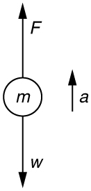Two forces are acting on an object of mass m: F, shown by an arrow pointing upward, and its weight w, shown by an arrow pointing downward. Acceleration a is represented by a vector arrow pointing upward. The figure depicts the forces acting on a high jumper.