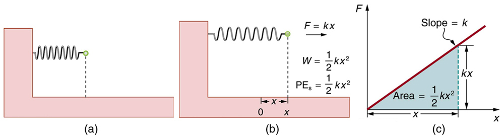 An undeformed spring fixed at one end with no potential energy. (b) A spring fixed at one end and stretched by a distance x by a force F equal to k x. Work done W is equal to one half k x squared. P E s is equal to one half k x squared. (c) A graph of force F versus elongation x in the spring. A straight line inclined to x axis starts from origin. The area under this line forms a right triangle with base of x and height of k x. Area of this triangle is equal to one half k x squared.