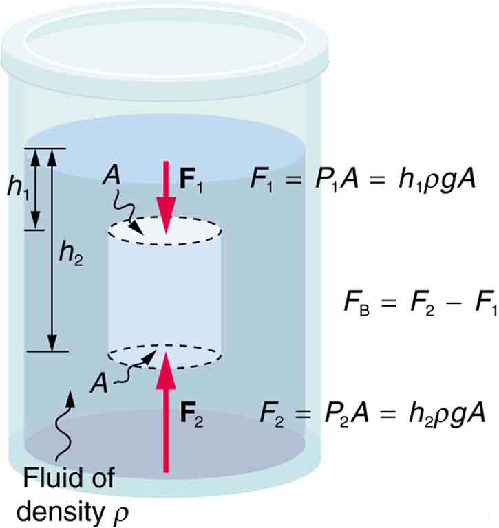 A cylinder of cross-sectional area A experiences an upward force F sub 2 on the bottom of the cylinder and a downward force F sub 1 on its top. Buoyant force is due to the difference between the upward force on the bottom of the cylinder and the downward force on its top.
