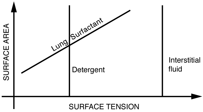 Graph of surface tension as a function of surface area for detergents and interstitial fluids.