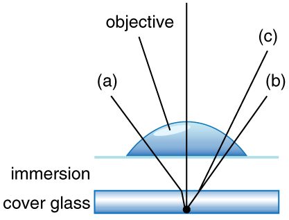 Diagram of paths of light from a specimen and refracting through air, water, and oil.