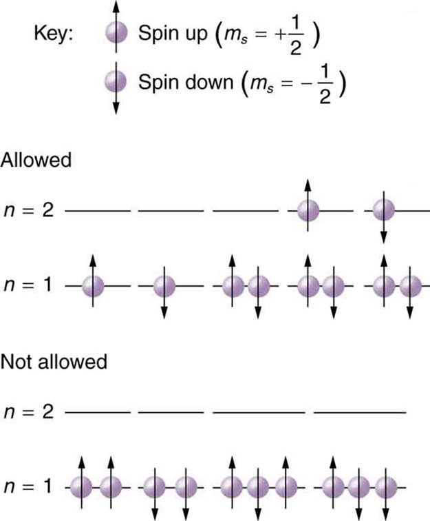 The figure here shows configuration of electrons. At the top, the key shows two purple balls, which depict electrons. The upward directed arrow on the first ball or electron shows its spin is plus one half, and the downward arrow on the second electron shows the opposite spin that is minus one half. Two other sections show the electronic configurations of electrons for two levels, n equal to one and n equal to two. One section shows the allowed configurations of the electron in the n is equal to one and two levels, and the second section for the configurations which are not allowed. In the allowed section, n is equal to two has three vacant shells and one electron in each of the outer two shells, one with spin up and one with spin down; and n is equal to one configuration has two shells containing one each spin up and spin down electron and the three other shells containing combinations of both spins each. For the not allowed section, n is equal to two have all vacant shells and n is equal to one have unevenly balanced electrons in its shells.