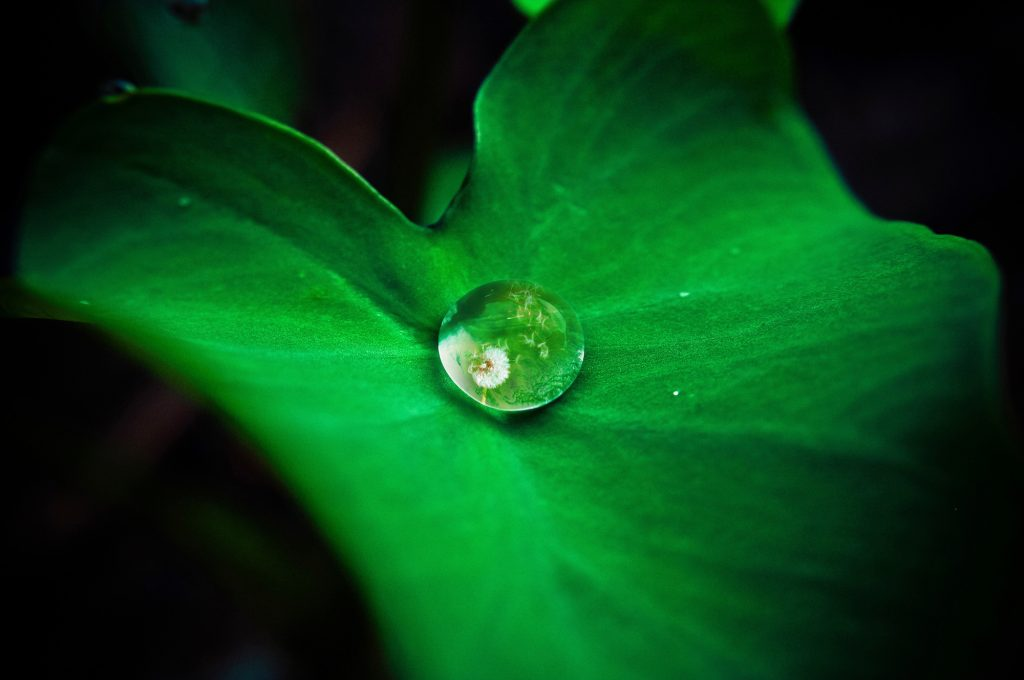 A leaf holding a droplet of water