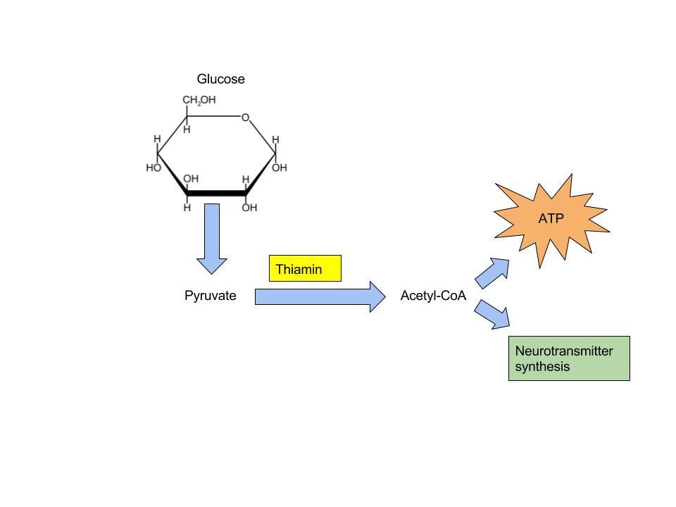 Diagram of Thiamin role