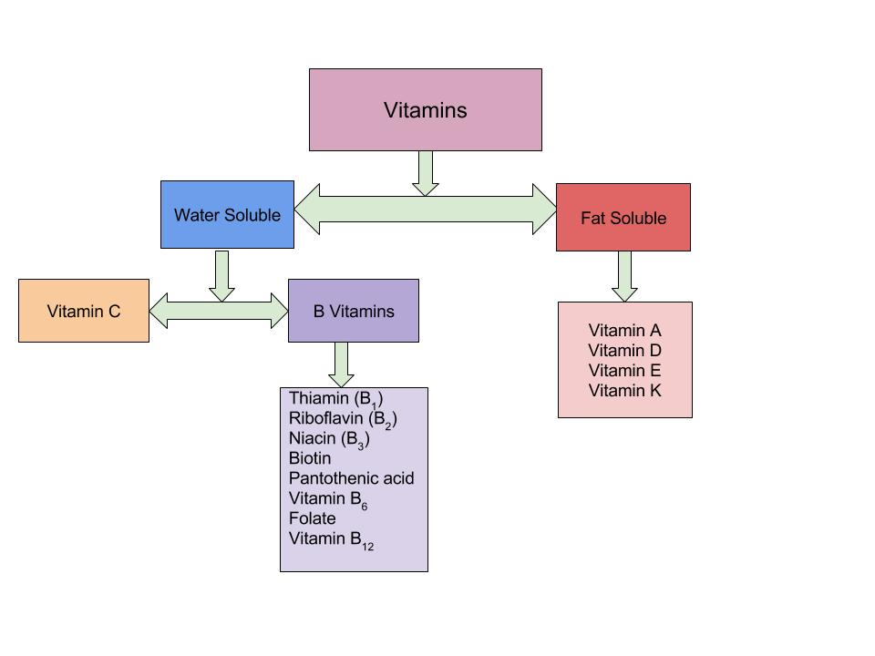 Flowchart of types of vitamins