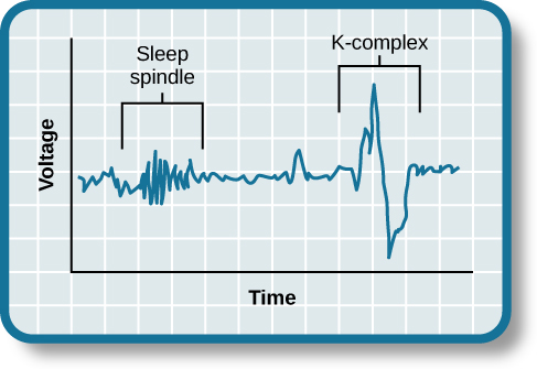 "A graph has an x-axis labeled ""time"" and a y-axis labeled ""voltage. A line illustrates brainwaves, with two areas labeled ""sleep spindle"" and ""k-complex"". The area labeled ""sleep spindle"" has decreased wavelength and moderately increased amplitude, while the area labeled ""k-complex"" has significantly high amplitude and longer wavelength."