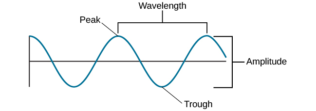 "A diagram illustrates the basic parts of a wave. Moving from left to right, the wavelength line begins above a straight horizontal line and falls and rises equally above and below that line. One of the areas where the wavelength line reaches its highest point is labeled ""Peak."" A horizontal bracket, labeled ""Wavelength,"" extends from this area to the next peak. One of the areas where the wavelength reaches its lowest point is labeled ""Trough."" A vertical bracket, labeled ""Amplitude,"" extends from a ""Peak"" to a ""Trough."""