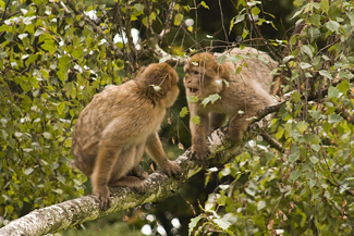 A photograph shows two monkeys face to face.
