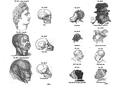 "Two facing pages of illustrations depict the skulls of various humans and animals. On the first page, these include ""Apollo Belvidere,"" a Greek statuary head shown beside a skull labeled ""Greek""; beneath this, ""Negro,"" a black man's head shown beside a skull labeled ""Creole Negro""; and at the bottom, ""Young Chimpanzee,"" a chimpanzee's head shown beside a skull labeled ""Young Chimpanzee."" On the opposite page, various drawings of animals and black humans are labeled ""Orang-Outan""; ""Hottentot Wagoner—Caffre War""; ""Chimpanzee""; ""Hottentot from Somerset""; ""Mobile Negro, 1853""; and ""Negro, 8200 Years Old."""