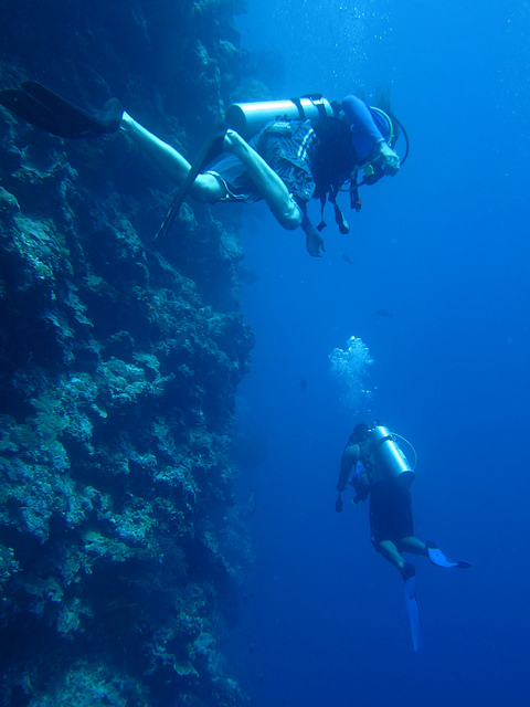 Two scuba divers diving near a wall in the ocean